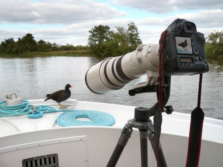telephoto: Time for your close-up Miss Moorhen -  A large telephoto lens is often required to get you close to the wildlife