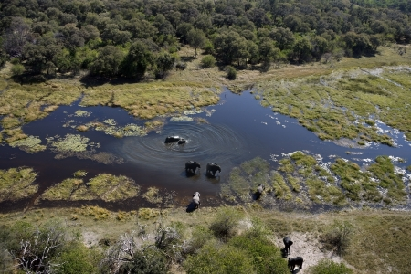 Aerial view of Elephants -  Loxodonta africana - in the Okavango Delta in Botswana