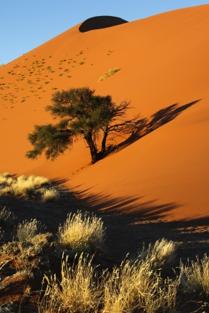 Early morning sun on the scrubland and sand dunes in the Namib Desert at Sossusvlei in Namibia photo