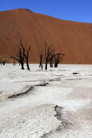 vlei: Dead Vlei salt pan in the Namib Desert in Namibia  Dead Vlei is located near the more famous salt pan of Sossusvlei