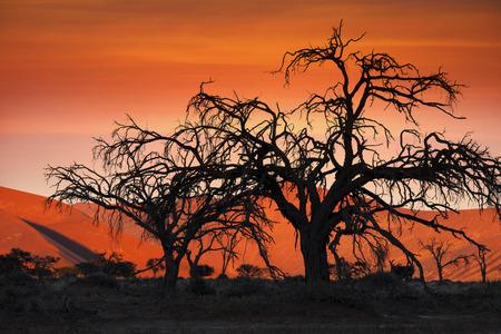 namib: Sunset in the Namib Desert at Sossusvlei in Namibia Stock Photo