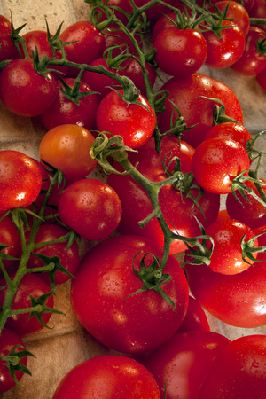 herbaceous: The tomato is a herbaceous, usually sprawling plant in the Solanaceae or nightshade family that is typically cultivated for the purpose of harvesting its fruit Stock Photo