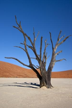 vlei: Dead Vlei in the Namib-nuakluft Desert near Sossusvlei in Namibia Stock Photo