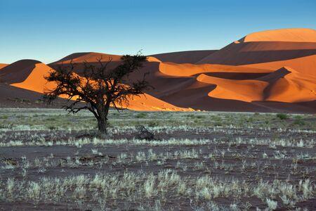 vlei: Dawn sunlight on the sand dunes in the Namib-nuakluft Desert near Sossusvlei in Namibia Stock Photo