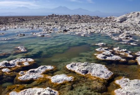 Brine pools of Chaxa Lagoon on the Atacama Salt Flats in the Atacama Desert in northern Chile photo