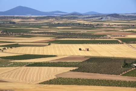 Vineyards and farmland near Consuegra in the La Mancha region of central Spain  photo
