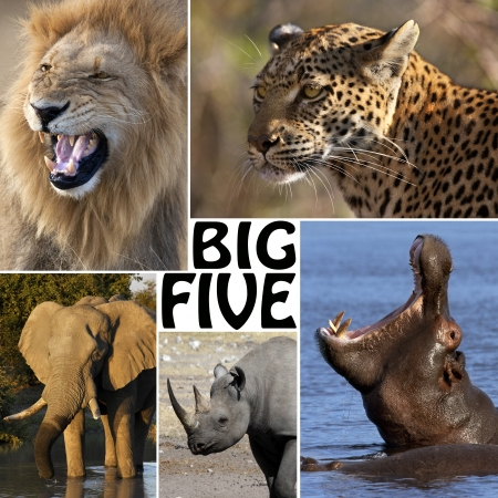 The Big Five - Lion, Elephant, Leopard, Hippoptamus and Rhinoceros
