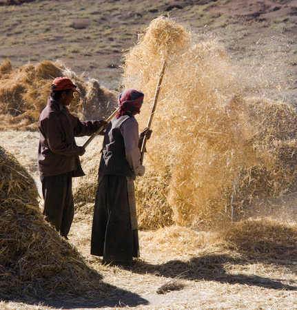 Peasent farmers at harvest time in the countryside near Gyantse in the Tibet Autonomous Region of Chine.