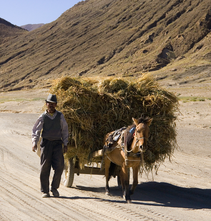Peasent farmer with horse and cart at harvest time in the countryside near Gyantse in the Tibet Autonomous Region of Chine.
