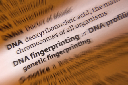fingerprinting: DNA Fingerprinting or DNA Profiling - DNA profiling is a technique employed by forensic scientists to assist in the identification of individuals by their respective DNA profiles.