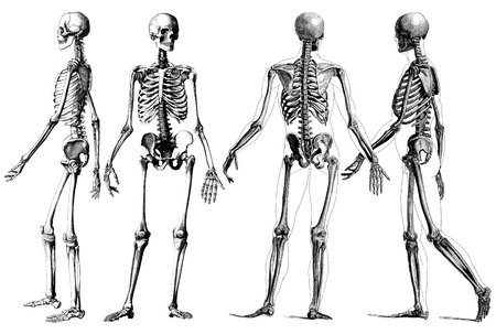Human Anatomy Skeleton Outline Drawing Pictures Picturesboss