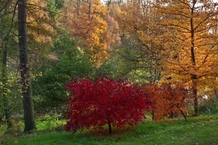 north yorkshire: Woodland trees and Autumn colors in North Yorkshire in the United Kingdom