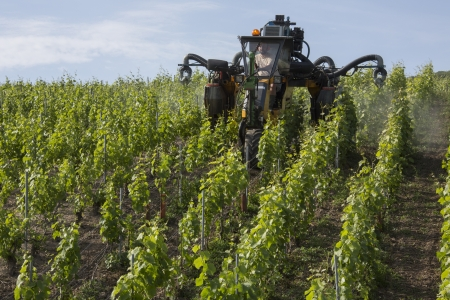 Mechanized spraying of a vineyard with insecticide  Near Reims in the Champagne region of northeast France