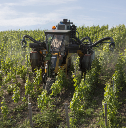 champagne region: Mechanized spraying of a vineyard with insecicide  Near Reims in the Champagne region of northeast France
