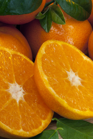 The Mandarin orange is the fruit of a small citrus tree  Citrus reticulata   Mandarin oranges are usually eaten plain or in fruit salads  Stock Photo - 27105261
