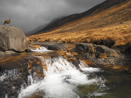 Stag on a rock outcrop aboce a mountain stream in Glen Rosa towards Goat Fell on the Isle of Arran in western Scotland in the United Kingdom