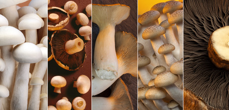 button mushrooms: A selection of Wild Mushrooms - Enoki, Shiro Shimeji, Buna Shimeji, button mushrooms, King Oyster and Portabello.
