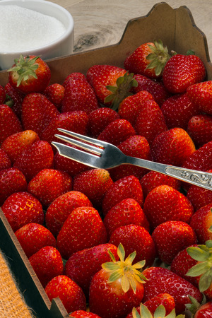 freshly picked: Box of freshly picked strawberries. Cultivated worldwide and consumed in large quantities, either fresh or in such prepared foods as preserves, fruit juice, pies, ice creams, milkshakes, and chocolates.