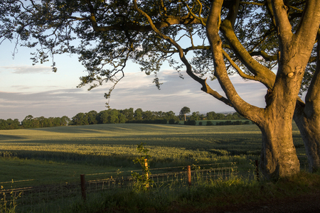 early morning: Early morning sunlight on the trees and fields of rural Ireland - County Antrim in Northern Ireland.