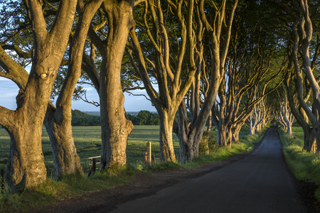 The 'Dark Hedges' - an avenue of ancient trees in County Antrim in Northern Ireland. Standard-Bild