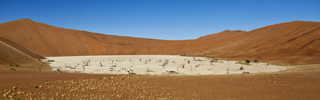 sossusvlei: Panoramic view of the salt pan and petrified trees in Dead Vlei in the Namib-nuakluft Desert near Sossusvlei in Namibia