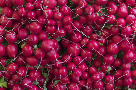 Radishes - an edible root vegetable of the Brassicaceae family . Radishes are grown and eaten throughout the world, mostly raw as a crunchy salad vegetable.