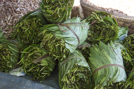 A market stall in Bagan in Myanmar selling Betal Leaf and Paan. Paan is a stimulating; psychoactive preparation of betel leaf combined with areca nut andor cured tobacco. Paan is chewed before spitting or swallowing. The Health effects of chewing paan are red stained teeth; gum damage; tooth decay and oral cancer.