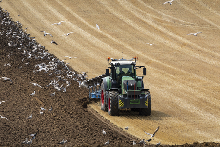 Flock of seagulls following a tractor plowing a field in the countryside of North Yorkshire in the United Kingdom