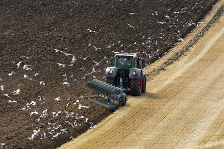 Flock of seagulls following a tractor on farmland in North Yorkshire in the United Kingdom.