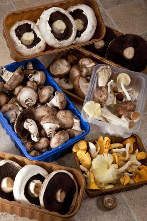 Selection of wild and commercially cultivated mushrooms including:  Portabello, Shitake, wild mushroom, Grey Oyster, Yellow Oyster, Eryngi and Black Poplar Stockfoto