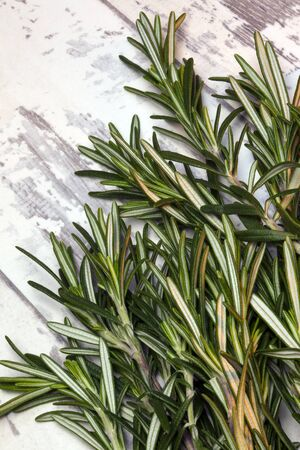 The herb Rosemary - Rosmarinus officinalis - native to the Mediterranean region and used as a flavoring in cooking.