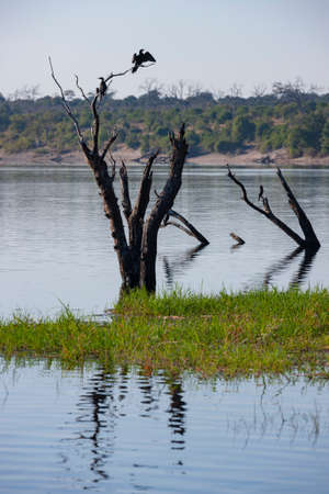 Dead tree on the riverbank of the Chobe River in Chobe National Park in northern Botswana, Africa. Stok Fotoğraf