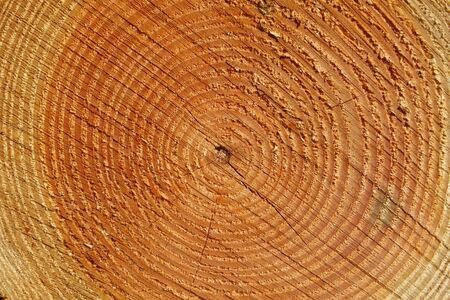Tree annual rings texture, close up pattern  photo