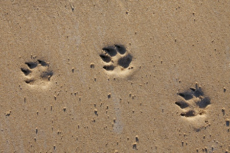 Animal footprints in the sand, copy space