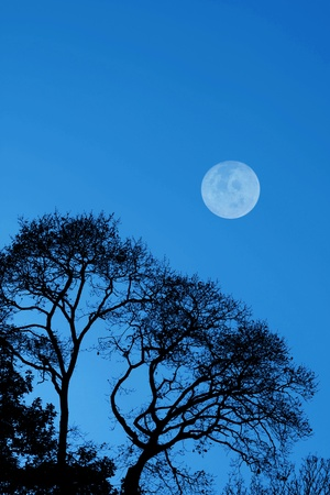 Silhouetted trees and moon against a dark blue sky