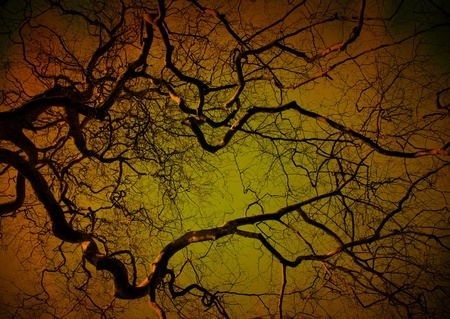 Spooky tree at night, orange and green glow