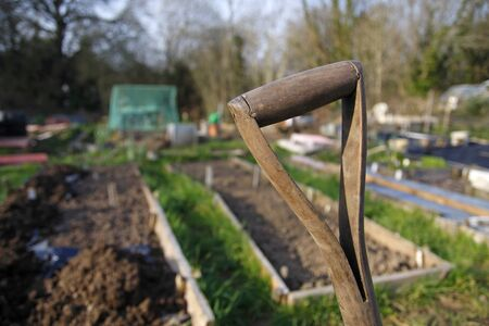 Old wooden spade handle in an allotment