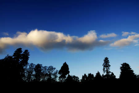 Silhouetted trees against a blue sky and white clouds photo