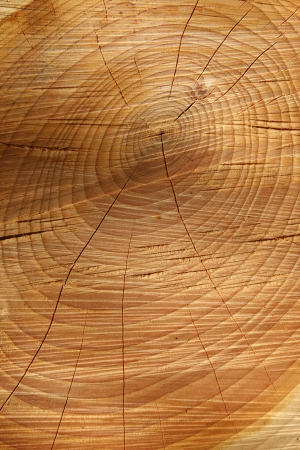 Sawn cracked timber showing annual rings