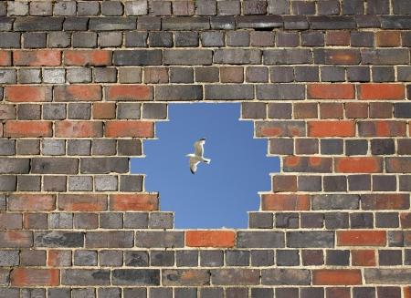 Flying bird through a hole in a brick wall background