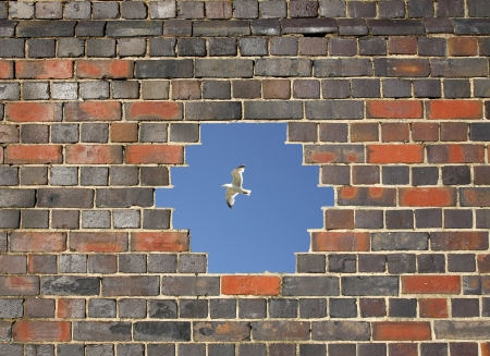 Flying bird through a hole in a brick wall background photo