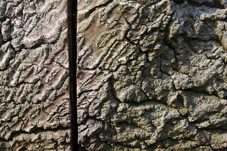 sawn: Sawn tree trunk close up