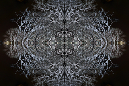 mirror image: Negative mirror image trees in a black sky