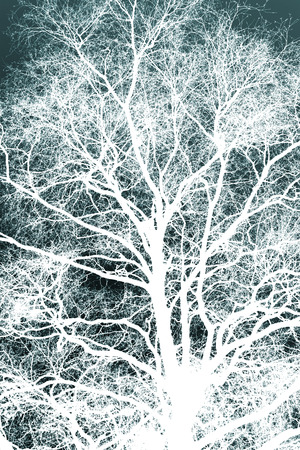 reversed: White silhouetted tree against a winter blue background