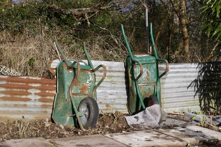 Two old rusty wheelbarrows in an allotment