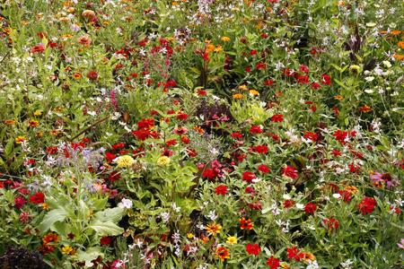 Jardín de pradera de flores silvestres con muchas flores y plantas de colores