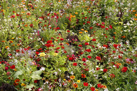 Wildflower meadow garden with many colourful flowers and plants