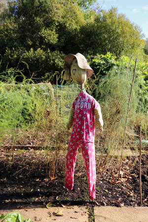 Funny scarecrow in an allotment in Autumn