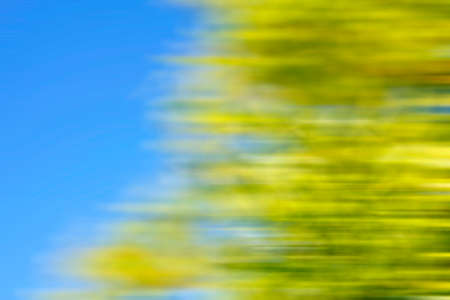 Tree blur and blue summer sky background