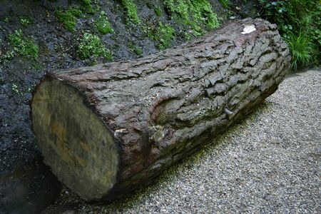 huge: Huge Wooden Log